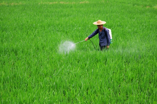 CCM: 5 problems in control of diseases and pests of minor crops in China