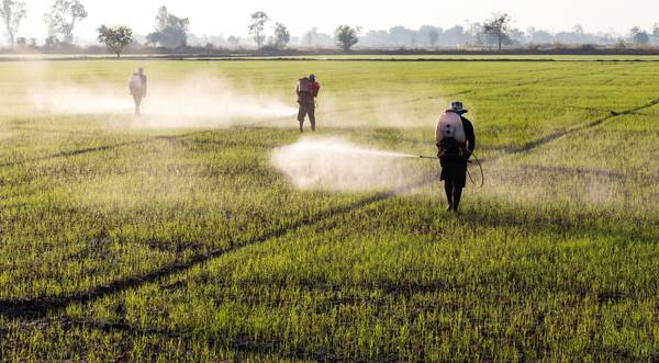 China about to ban all sales and use of paraquat by 2020