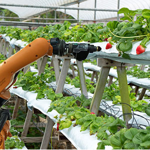 Using AI in agriculture - China has launched her first project