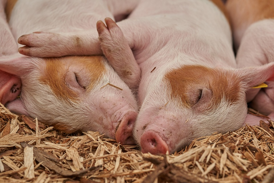 Wens (Yun'an) Integrated Pig Breeding Project Contract