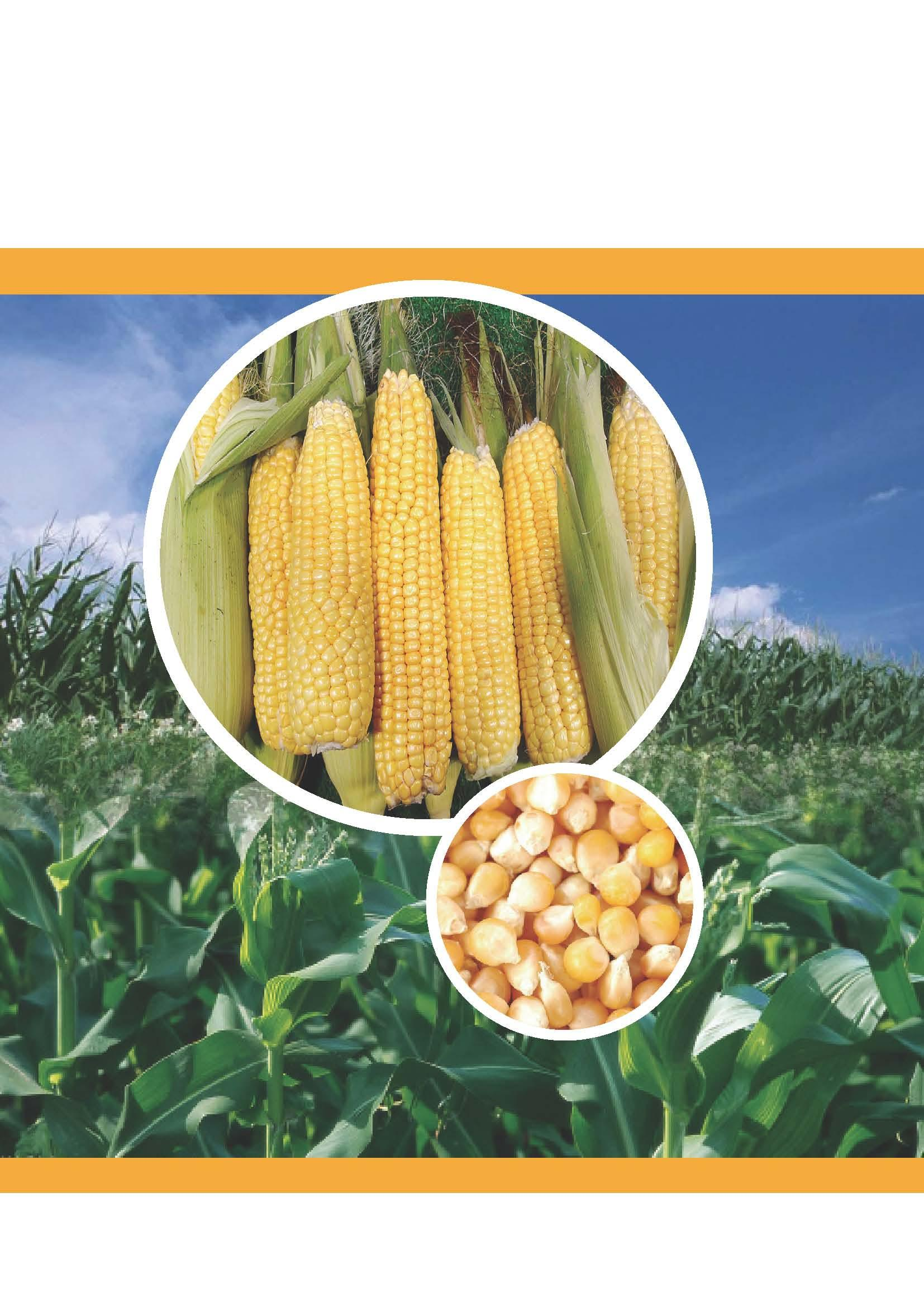 MOA issues Work Plan for Corn and Soybean Meal in Feed Production